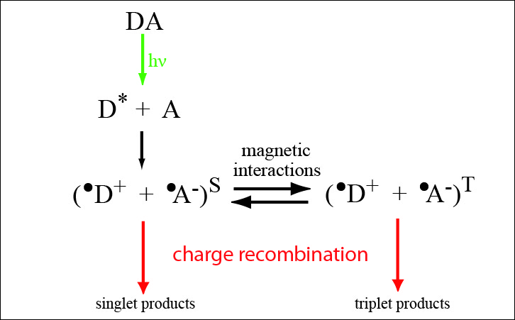 """Comment on """"Spin-selective reactions of radical pairs act as quantum measurements"""""""