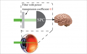 Quantum biometrics with retinal photon counting
