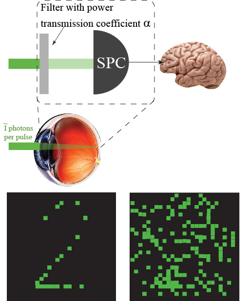 Quantum biometrics