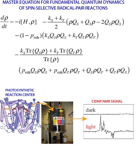 Quantum Biology - Quantum Physics & Quantum Biology