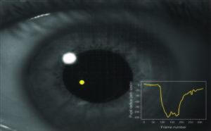 Spatially-selective and quantum-statistics-limited light stimulus for retina quantum biometrics and quantum pupillometry