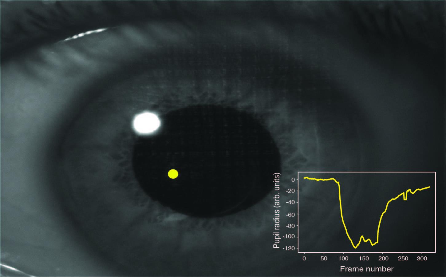 Spatially-selective and quantum-statistics-limited light stimulus for retina quantum biometrics and quantum pupillometry