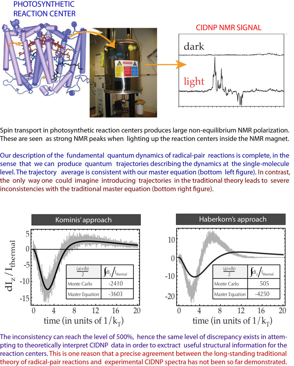 Quantum Dynamics in Photosynthetic Reaction Centers