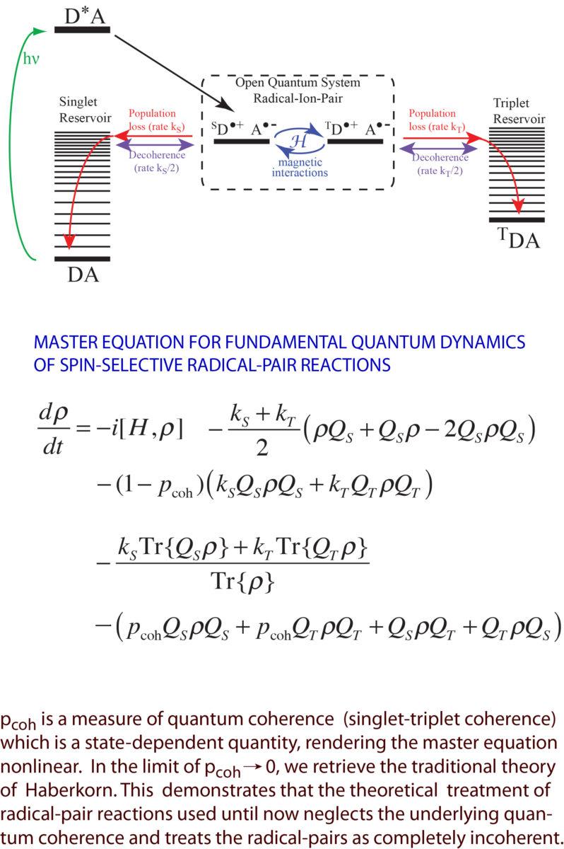 Quantum Foundations of the Radical-Pair Mechanism